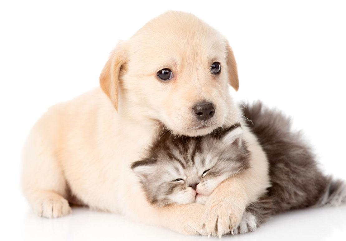 Открытки животные домашние